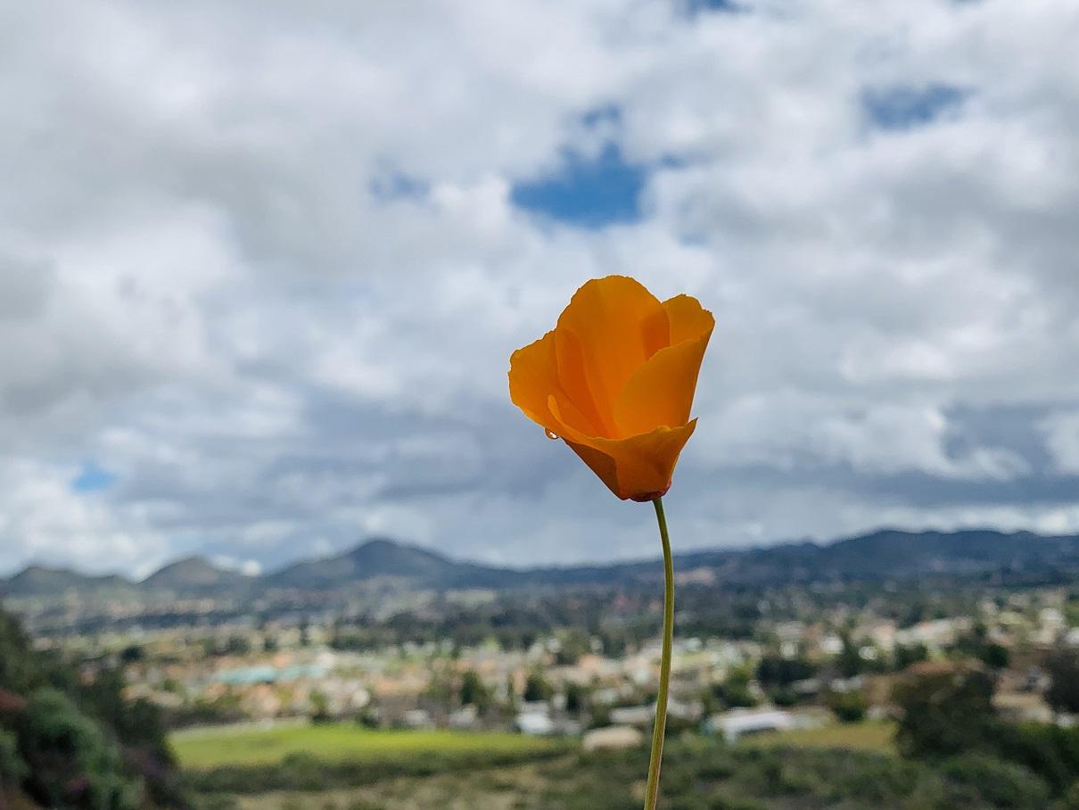 꽃5.jpg
